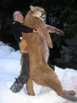 Picture Of Mountain Lion Puma Concolor